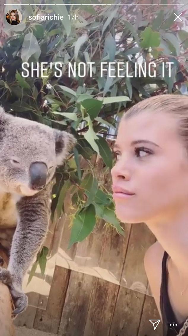 Sofia Richie, Zoo, Koala