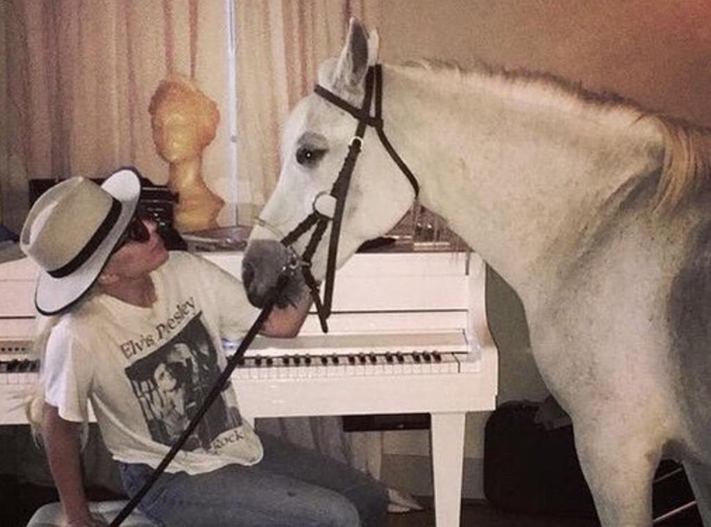 Lady Gaga, Horse