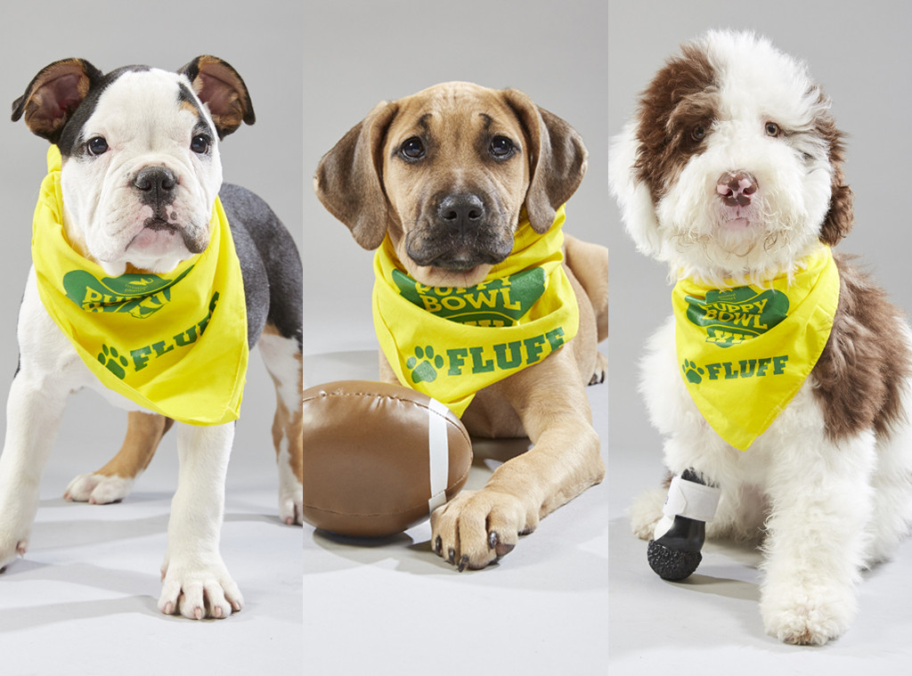 Meet the Adorable & Adoptable Dogs Competing in This Year's