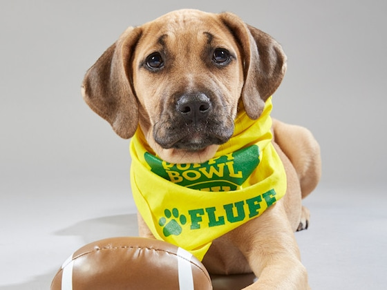 Meet the Adorable & Adoptable Dogs Competing in This Year's Puppy Bowl
