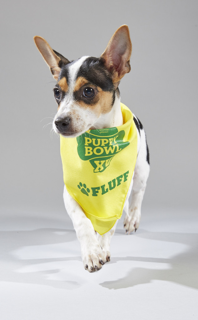 American Staffordshire Terrier Breeders Ny