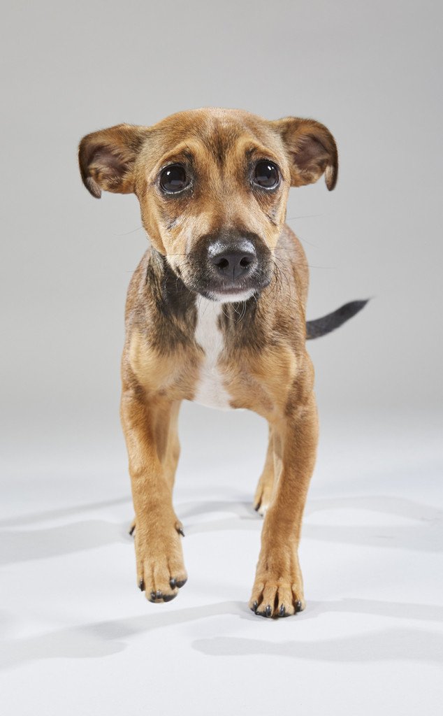 Meet the Adorable & Adoptable Dogs Competing in This Year's Puppy