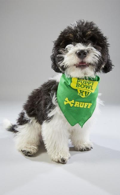 Puppy Bowl XV