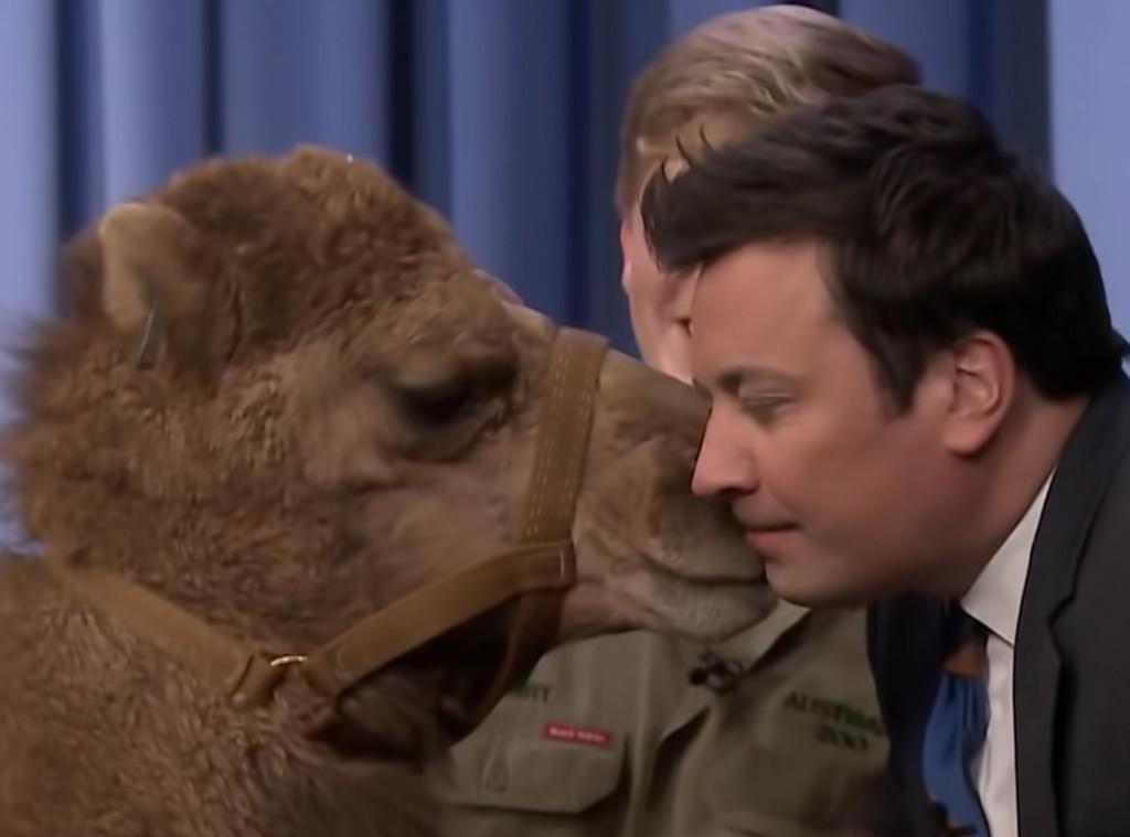 Jimmy Fallon, Camel