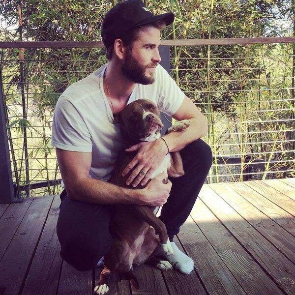 Liam Hemsworth, Dog
