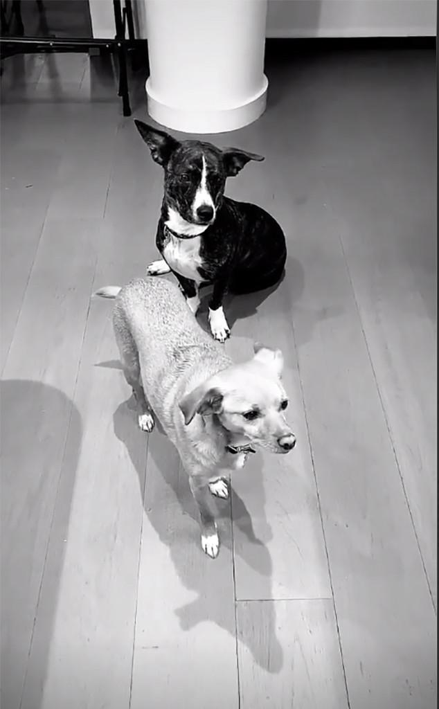 Ariana Grande, Mac Miller, Dog