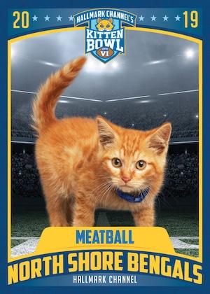 Kitten Trading Cards, Kitten Bowl 6