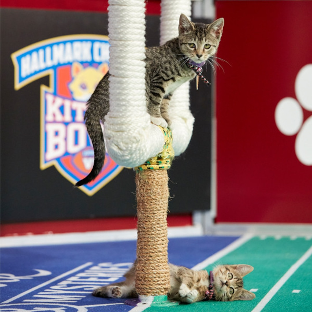 Meet The Fierce And Furry Cats Competing In Kitten Bowl 2019 E Online