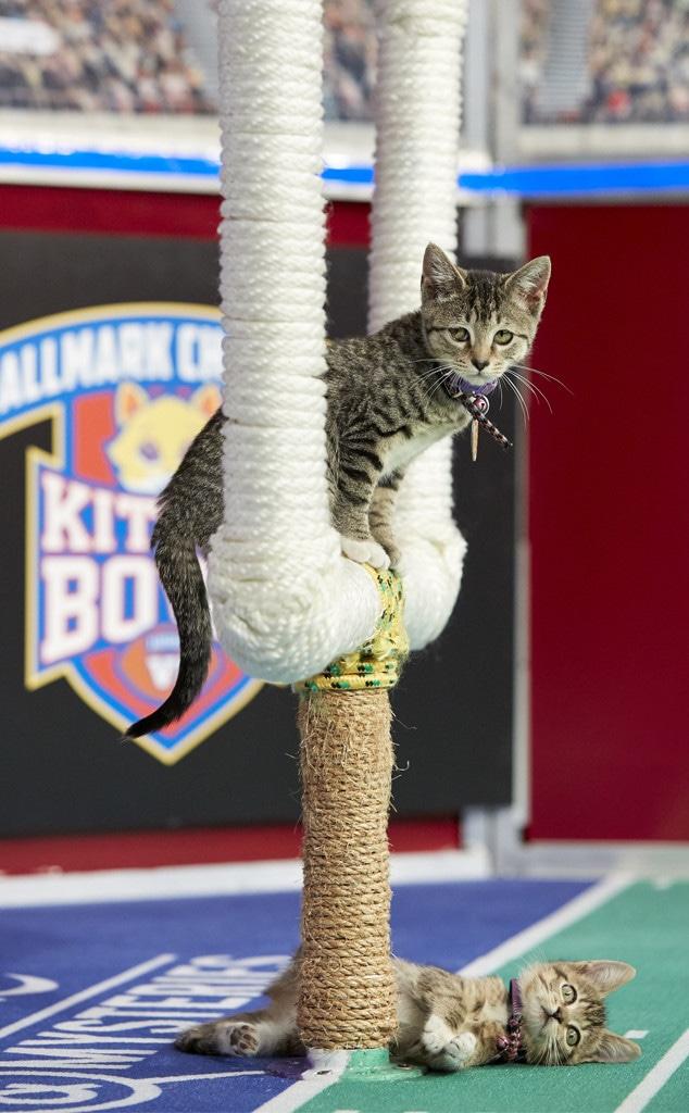 Kitten Bowl 2019