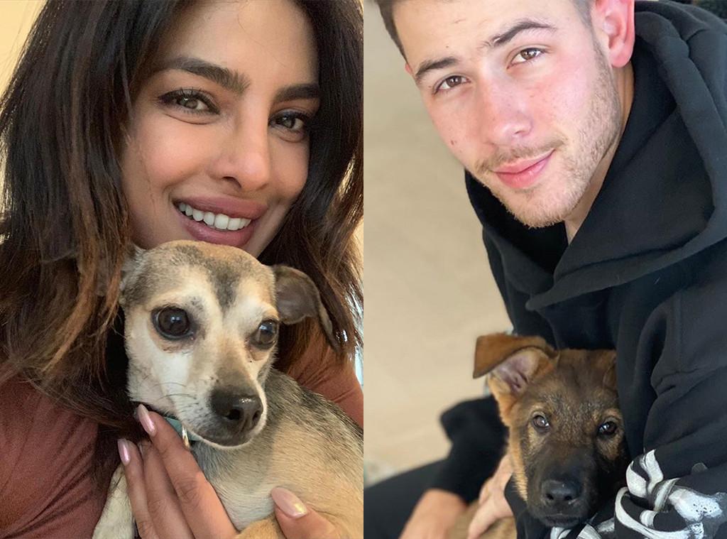 Priyanka Chopra, Nick Jonas, Diana Chopra, Gino Jonas, Dogs