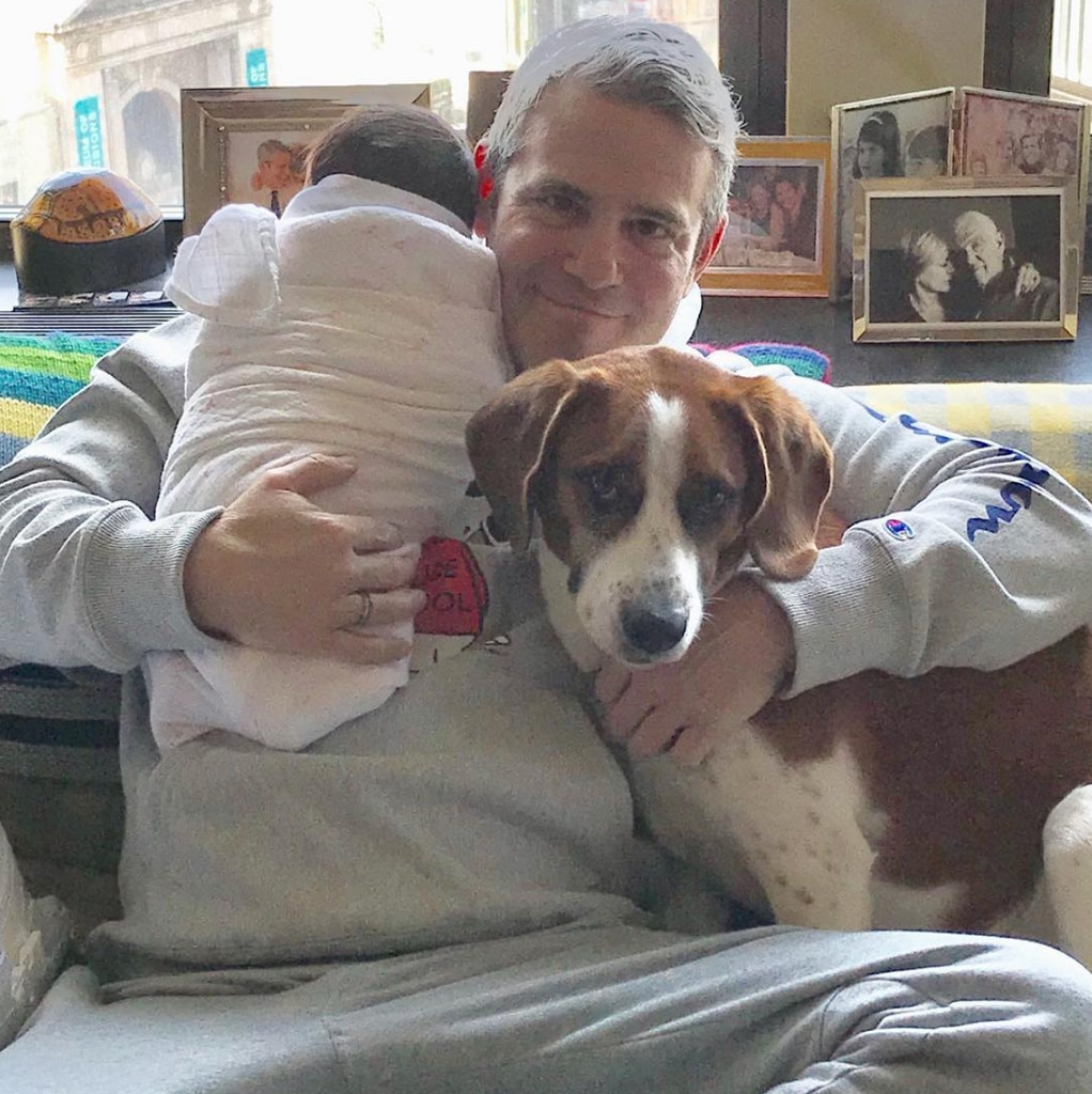 """Andy Cohen -  """"TWO Valentines! Lucky me,"""" the Watch What Happens Live host and new dad gushed on Instagram."""