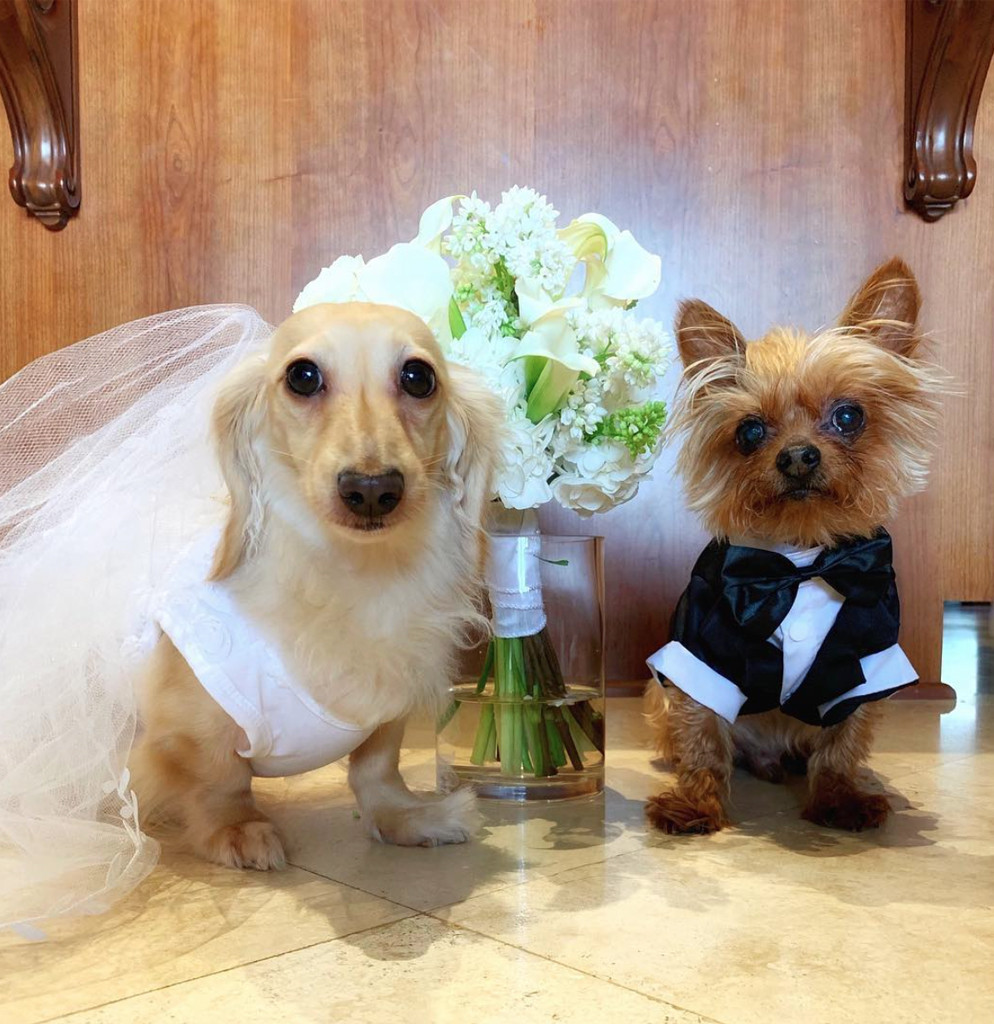 Tommy Lee, Brittany Furlan, Dogs