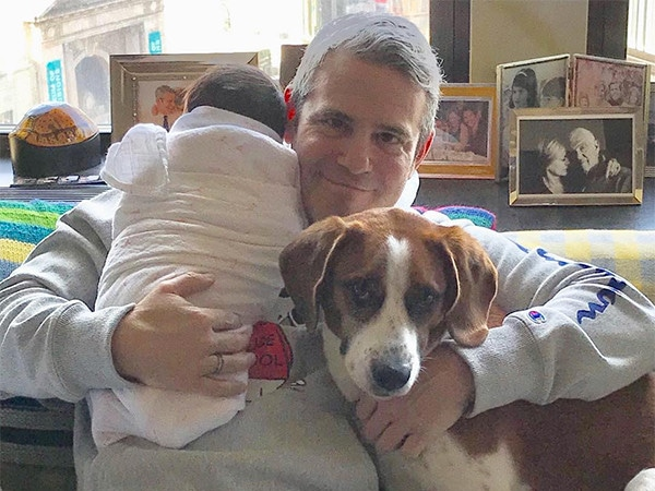 """Andy Cohen Fires Back at """"Judgy as F--k"""" Critics After Dog Destroys His Son's Toy"""