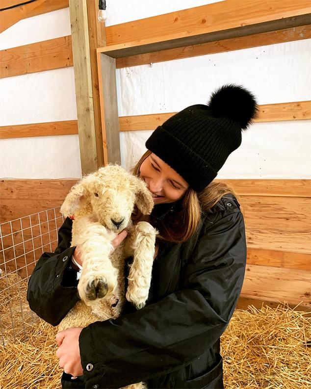 Katherine Schwarzenegger, Chris Pratt, Farm, Instagram