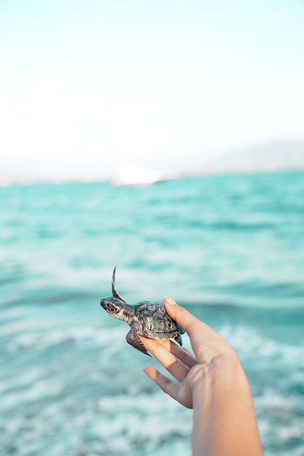 Saving Sea Turtles, The Sweet Life