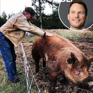 Chris Pratt, Boar
