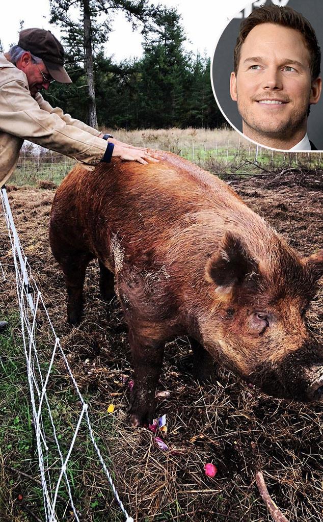 Chris Pratt, Boar