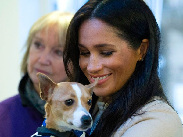 Meghan Markle May Just Persuade You to Adopt an Animal