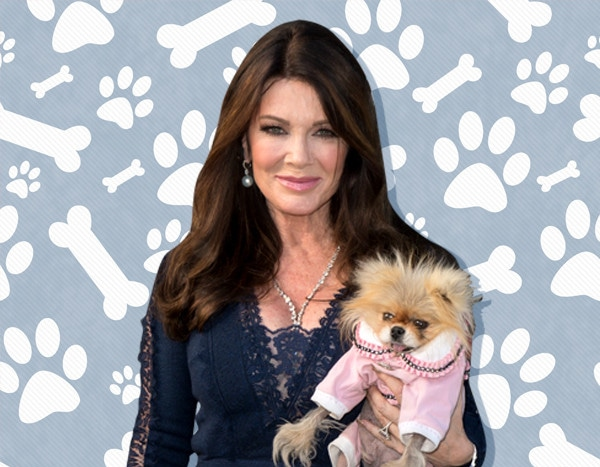 15 Celebrity Dog Products That Will Have Tails Wagging