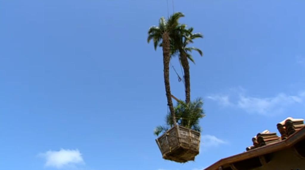 Laguna Beach, Palm trees