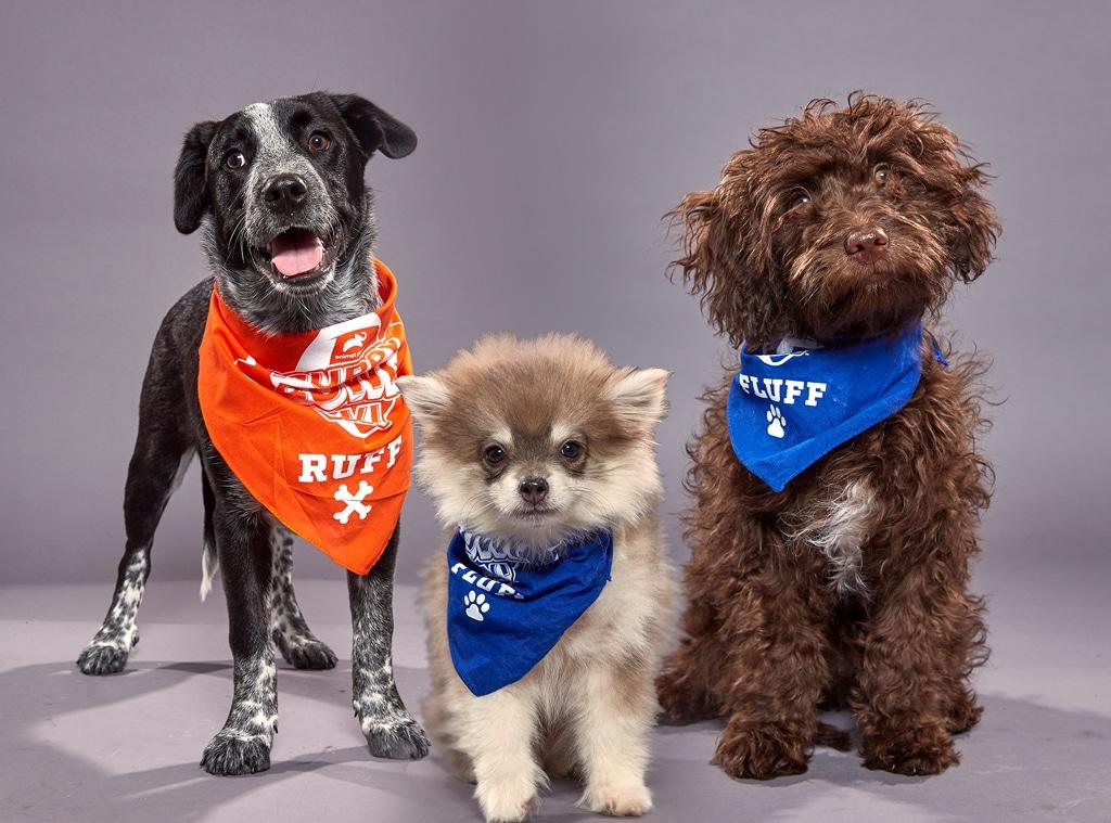 Puppy Bowl XVI, Aspen, Bobby, Theodore