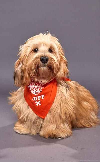Puppy Bowl XVI
