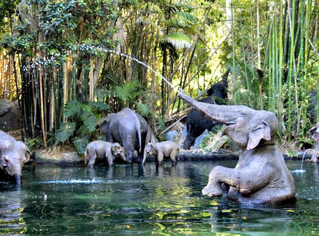 Disneyland, Jungle Cruise