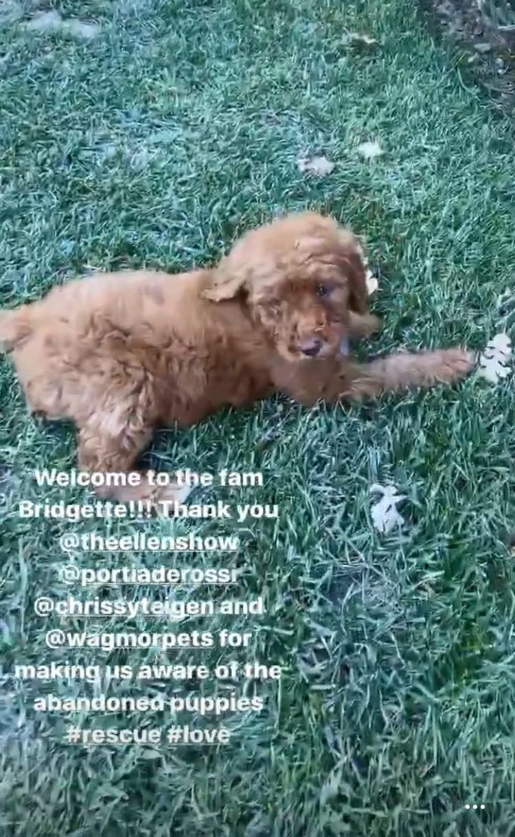 Kris Jenner, Puppy, Dog, Pets
