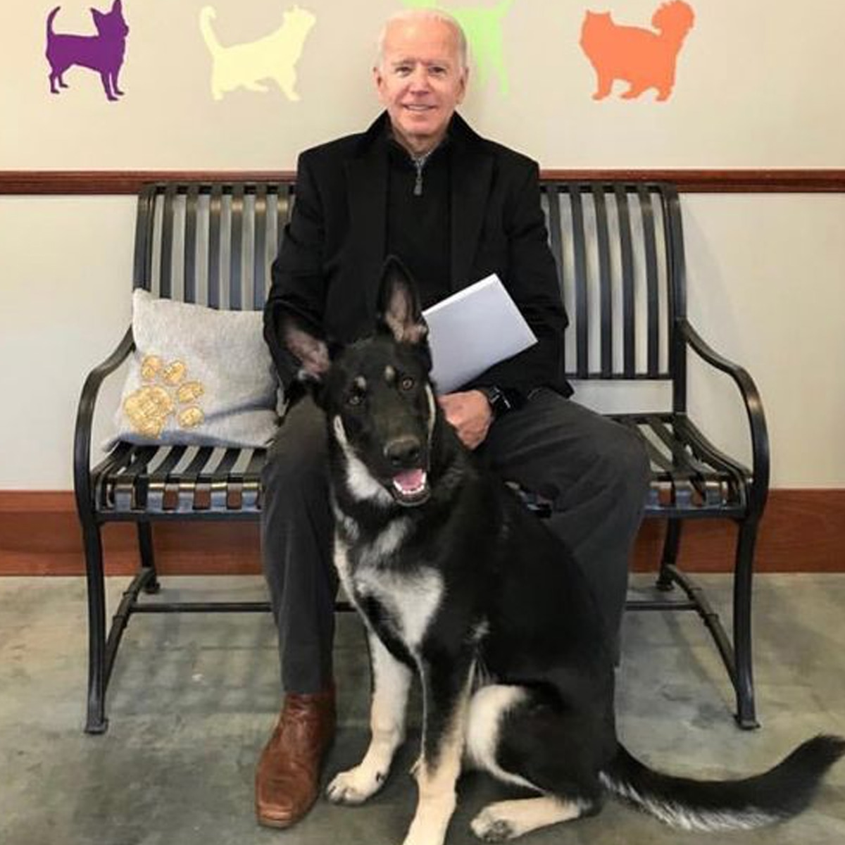 This Says a Lot…Joe Biden will Unite Cat with Dogs in the White House