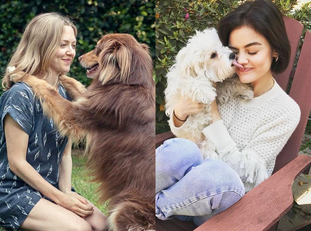 E-Comm: Dog Friendly Hotels, Amanda Seyfried, Lucy Hale