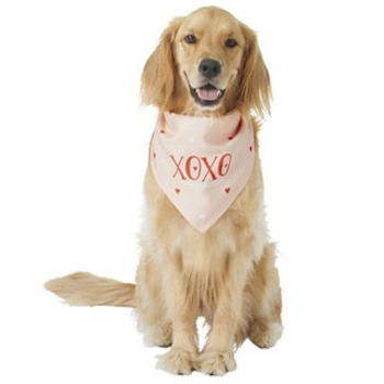 Gifts for Your Furry Valentine