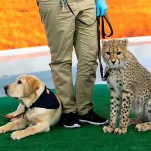 Dog, Cheetah, Turtle Back Zoo