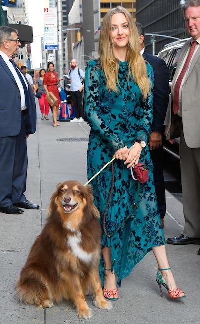 Amanda Seyfried, dog, Finn, National Puppy Day 2020