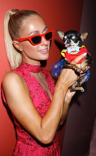 Paris Hilton, dog, Diamond, National Puppy Day 2020