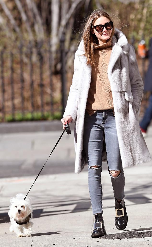 Olivia Palermo, dog