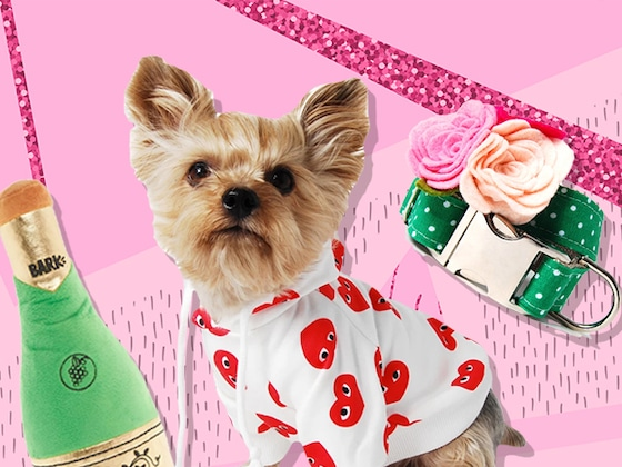 Just 21 Doggone Cute Things to Treat Yo Puppy