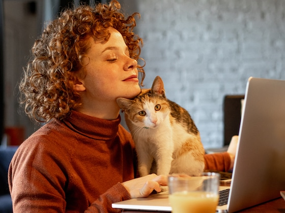 17 Things to Keep Your Cat Busy While You (Try to) Work From Home