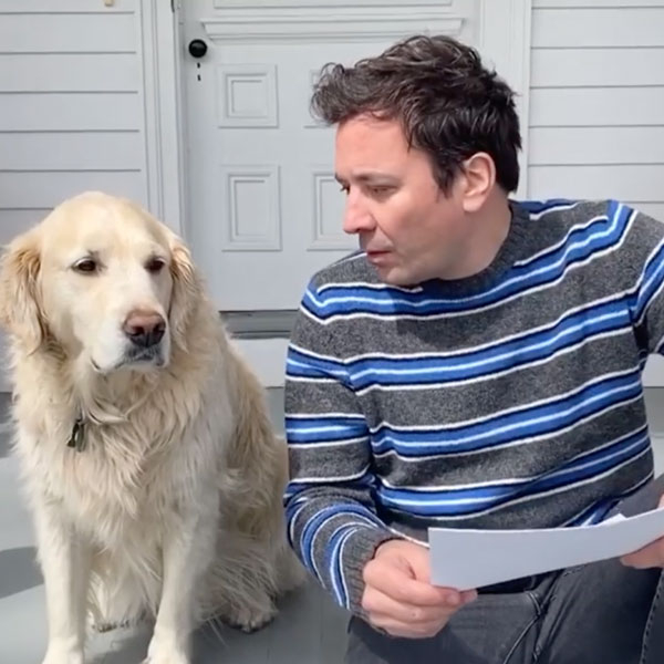 Watch Jimmy Fallon Get Trolled By His Dog During Hilarious Interview