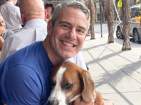 Andy Cohen Reveals He Rehomed Beloved Dog Wacha in Heartbreaking Announcement