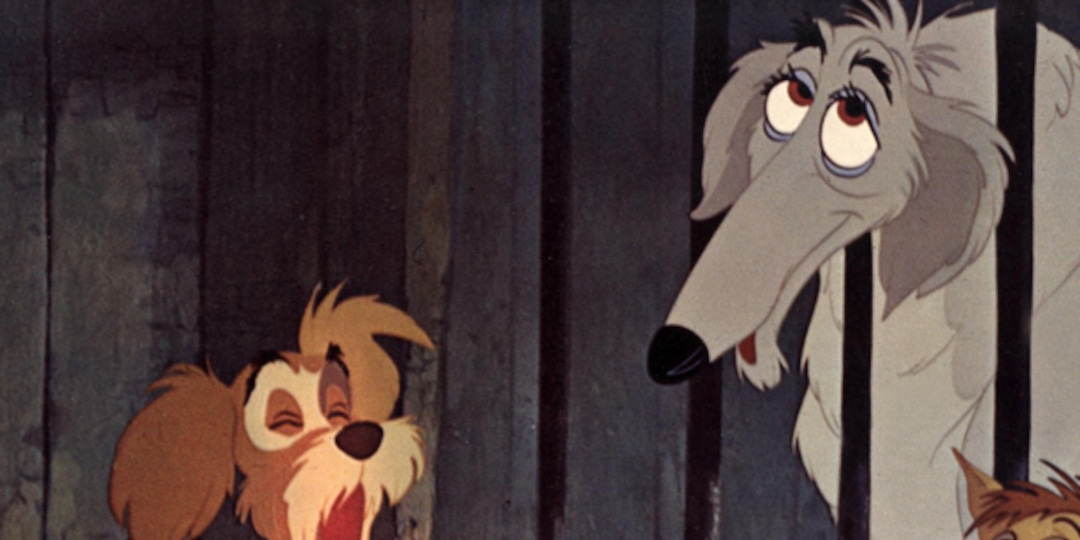 Photos From 14 Doggone Adorable Secrets About Disney S Lady And The Tramp E Online Au