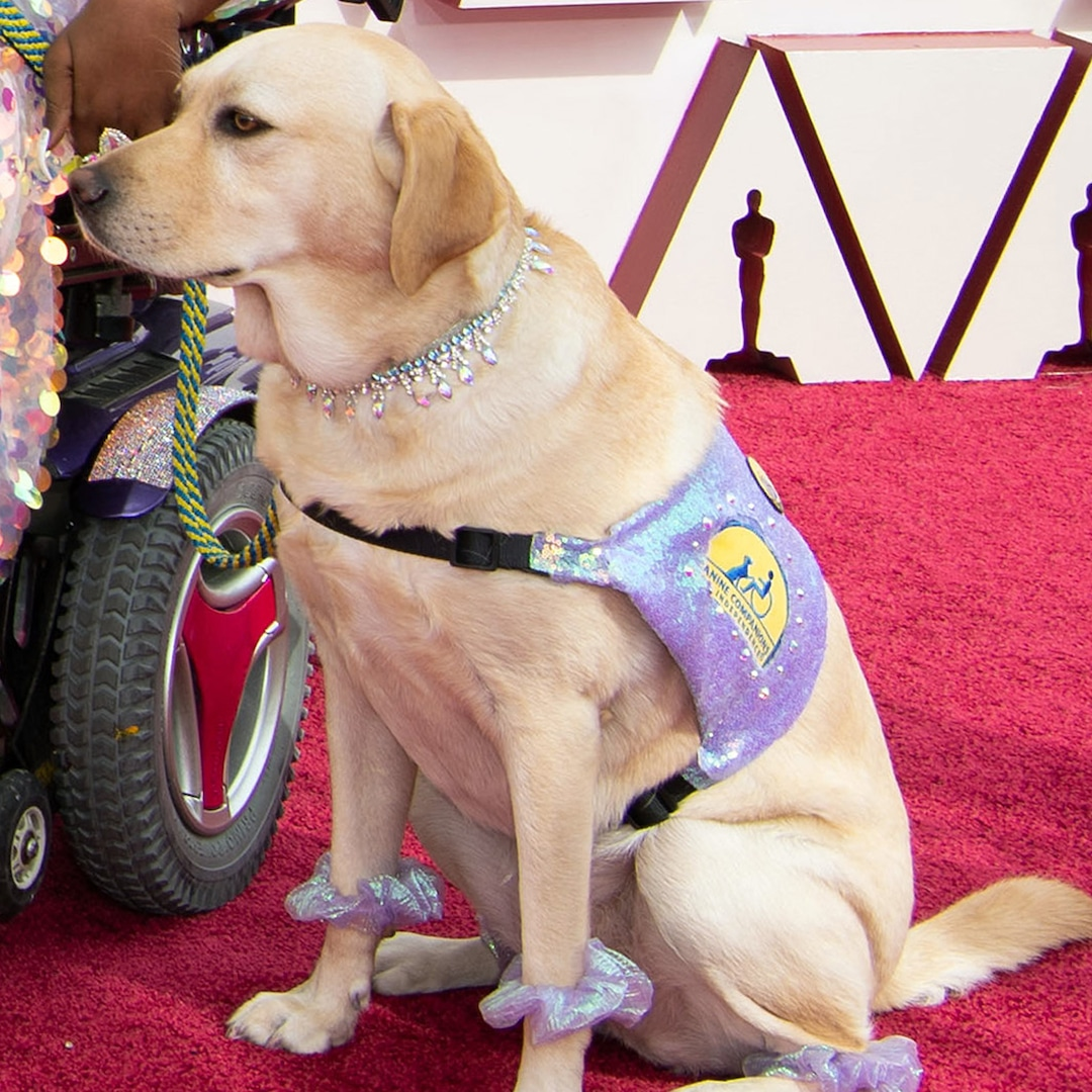 You May Have Missed the Adorable Service Dog Who Attended the 2021 Oscars