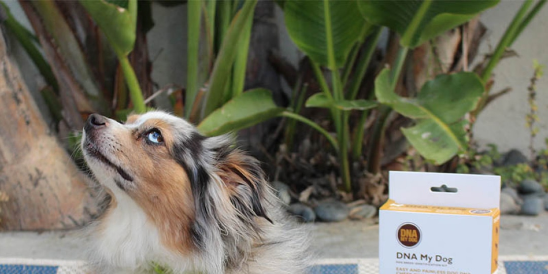 Attention, Pet Parents! This Dog DNA Kit Can Help You Get to Know Your Pup Better - E! Online.jpg
